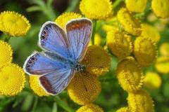 Diget - august - blålig hun på Rejnfan