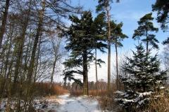 Bøtøskoven i vinterdragt i marts