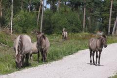 Fredelige Vildheste i Bøtøskoven