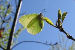 Plantagen - maj - æglæggende hun på Tørst