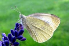 Ved sommerhus  - september - på Lavendel