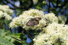 Plantagen (i skel mod diget) - maj -på Hvidtjørn