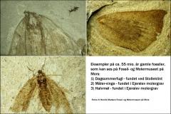 Fund som kan ses på Fossil- og Molermuseet på Mors