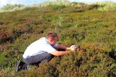 Diget - fotografering af Argusblåfugl på Lyng